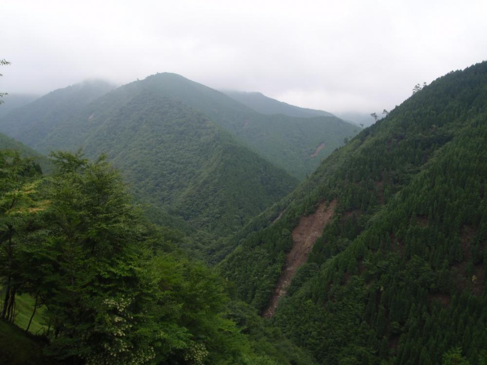 気象条件に適合する造林